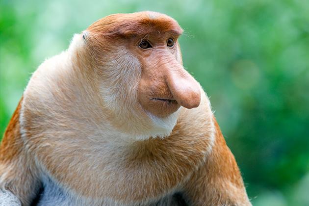 Borneo-Wildlife.jpg
