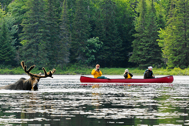 4-Call-of-the-Wild-–-Wilderness,-Moose-and-Wolves.jpg