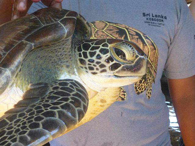 Gemma-Turtles3.jpg
