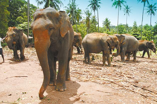 Sri-Lanka-630px-420px.jpg
