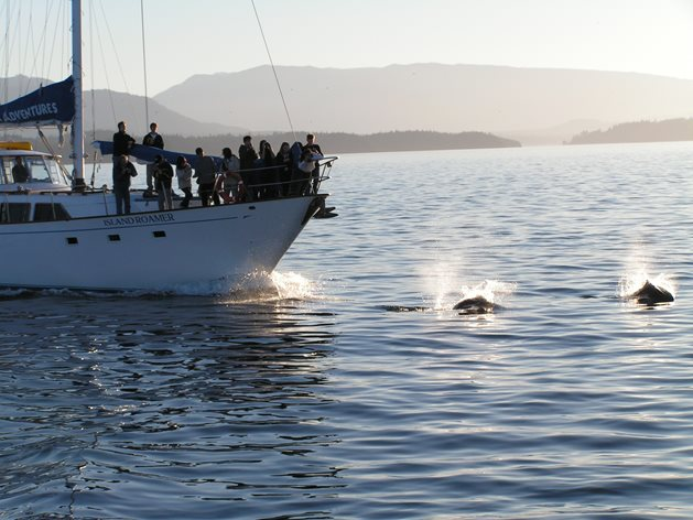 Page-22-Bluewater-Adventures-Haida-Gwaii-Boat-dolphins.jpg