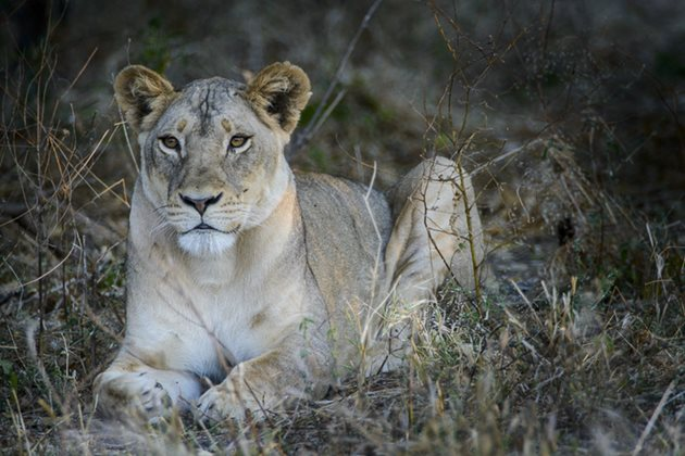 Citizens of the World in Chobe, Africa